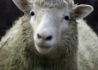 'Dolly' the Sheep at The Roslin Institute (BBC News)